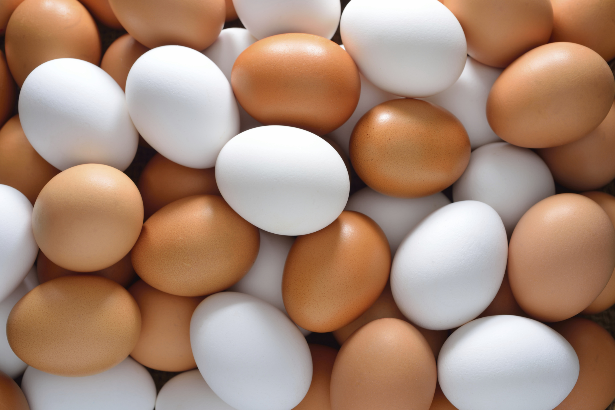 Image result for eggs eggs and more eggs